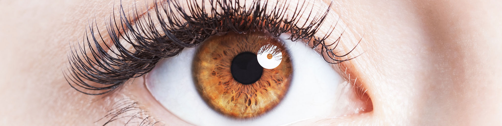 Introduction to the Eye - Longview Eye and Vision